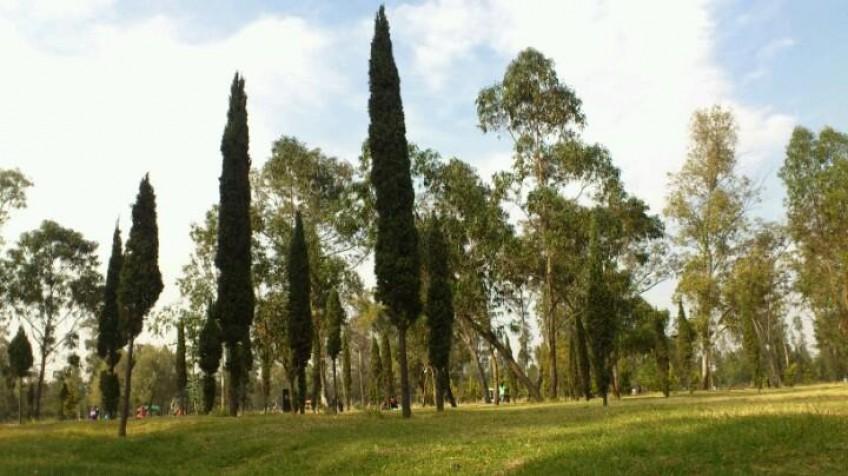 Bosque de Aragón